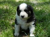 Puppy6