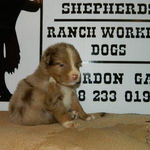 cheyenne pups 7-31-17 006