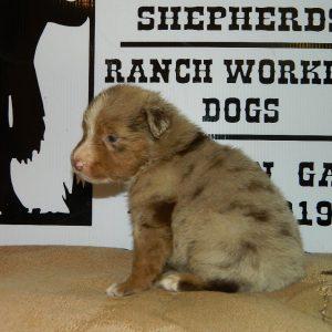 cheyenne pups 7-31-17 009