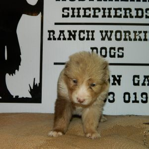 cheyenne pups 7-31-17 017