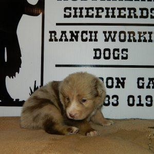 cheyenne pups 7-31-17 020