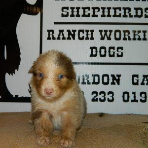 cheyenne pups 7-31-17 024