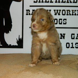 cheyenne pups 7-31-17 045