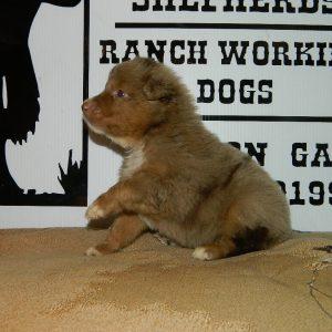 cheyenne pups 7-31-17 051