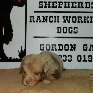 cheyenne pups 7-31-17 057