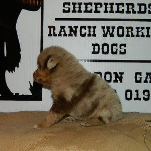 cheyenne pups 7-31-17 059