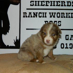 cheyenne pups 7-31-17 065