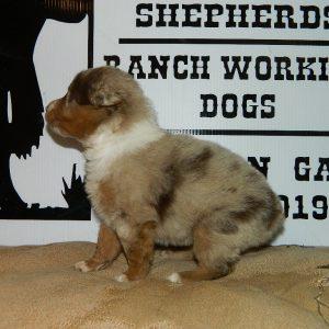 cheyenne pups 7-31-17 069