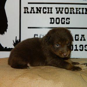 cheyenne pups 7-31-17 081