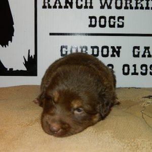 cheyenne pups 7-31-17 086