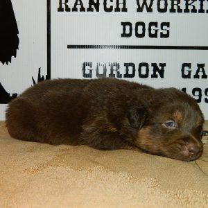 cheyenne pups 7-31-17 089