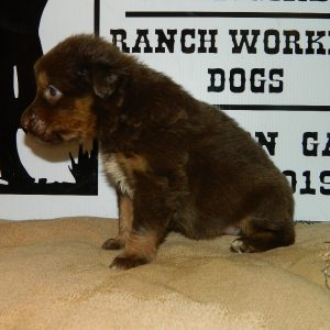 cheyenne pups 7-31-17 091