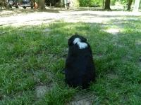 Puppy7